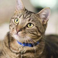 ماجرای قضیه مجید و گربه چیست + عکس و فیلم