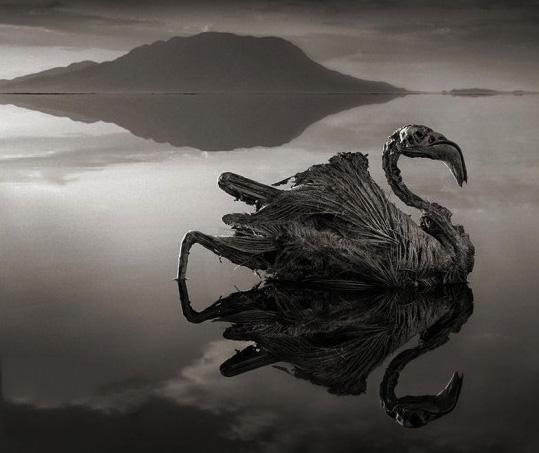 ترسناک ترین دریاچه دنیا,ناترون کجاست,ph بالا اب دریاچه ناترون,جریان اب دریاچه ناترون,عکس دریاچه ناترون,عکس ترسناکترین دریاچه جهان,عکس دریاچه ناترون,ph