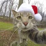 گربه باهوشی که عکس سلفی می گیرد