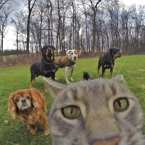 گربه باهوشی که عکس سلفی می گیرد,سلفی حیوانات,عکس سلفی گربه,عکس های گربه باهوش بنام منی که از خودش سلفی می گیرد,سلفی گربه از خودش و دوستاش,سلفی گربه خانگی