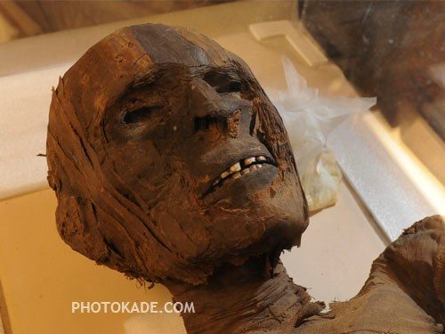 ماجرای کوکائین و تنباکو در مومیایی باستانی