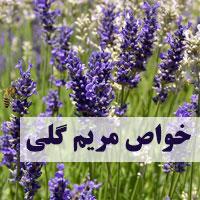 خواص مریم گلی برای لاغری، زنان، پوست و مو