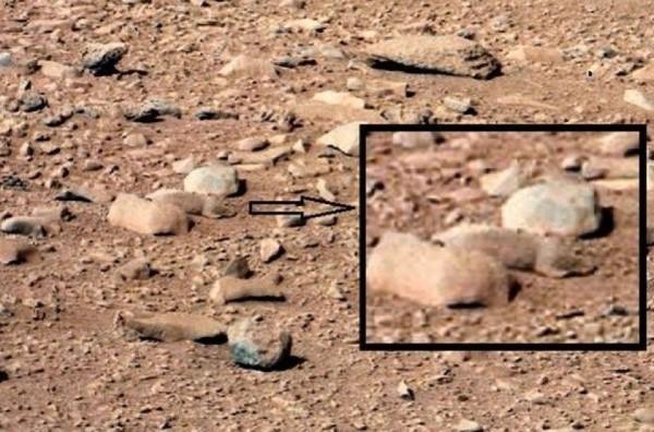 کشف موجود زنده در مریخ با عکس و توضیحات کامل