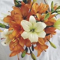 گالری عکس پروفایل گل