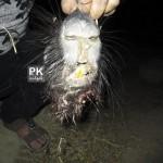 جانوری ناشناس و ترسناک در ایران