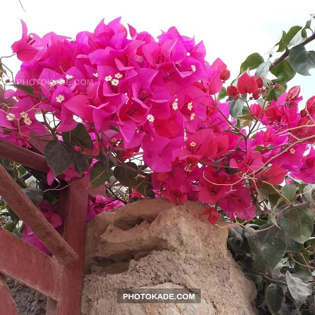 سفره های زیبا عید نوروز 94,شیک ترین عکس های نوروزی و خرید مردم,عکس های ماهی و سبزه عید و وسایل عید نوروز در ایران