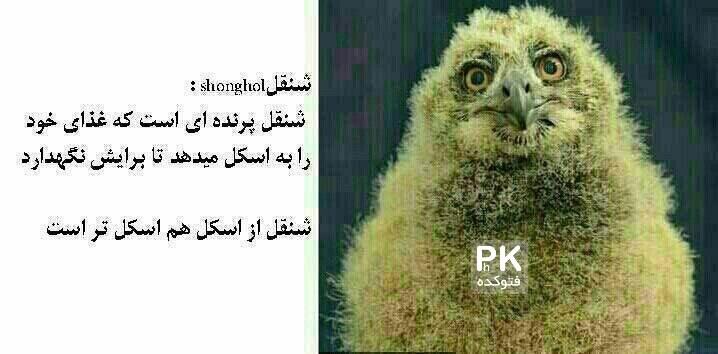 پرنده های اسکل امل شنقل دنگل,اسکل به کی میگن,اسکل از کجا آمده است,پرنده اسکل,معنی اسکل,عکس خنده دار,امل یعنی چی,پرنده امل,امل نباش,عکس جالب خفن,باحال,منقل