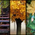 عکس های زیبا طبیعت پاییز