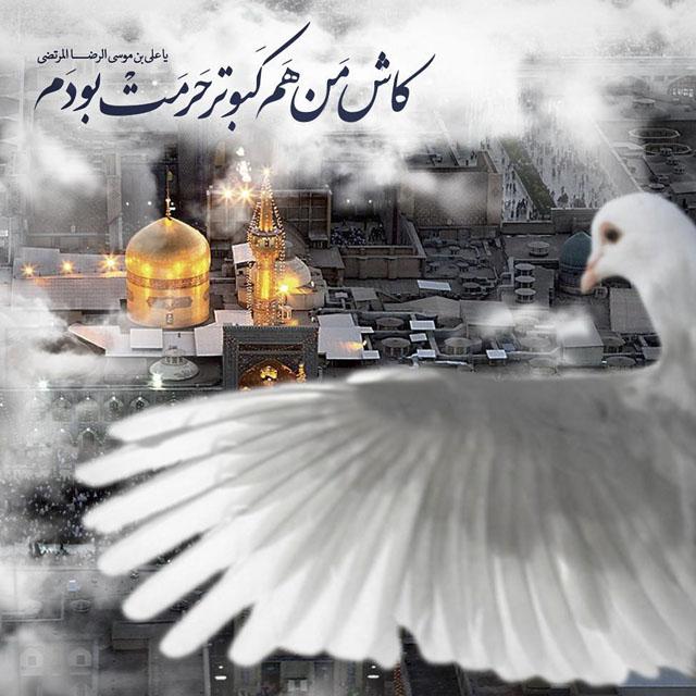 عکس برای پروفایل امام رضا