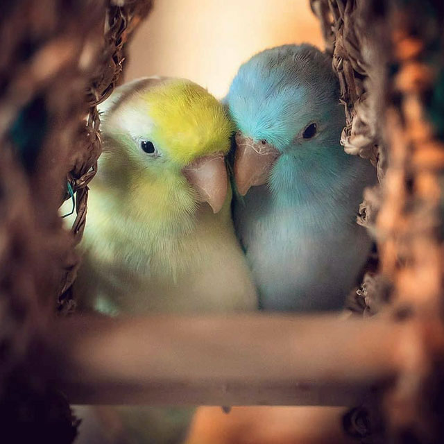 عکس های پروفایل طوطی عاشقانه بدون متن