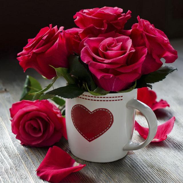 عکس پروفایل گل های رز قرمز عاشقانه و زیبا