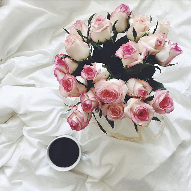 عکس گل رز صورتی برای پروفایل واتساپ