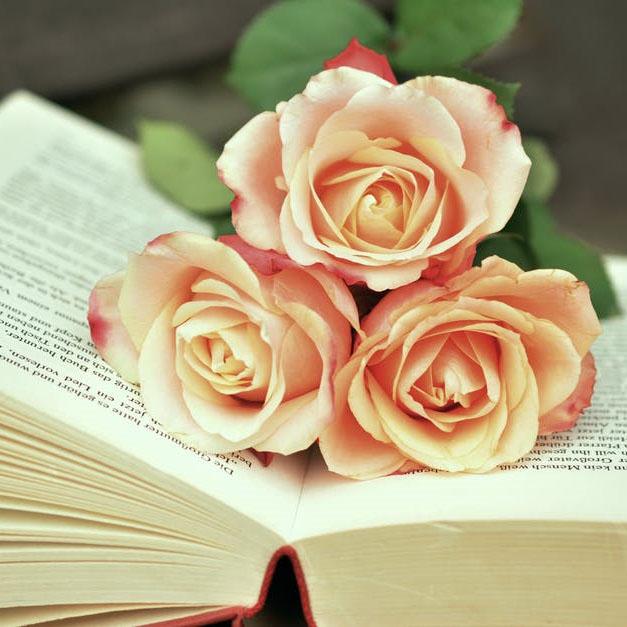 پروفایل گل رز زیبا و قشنگ