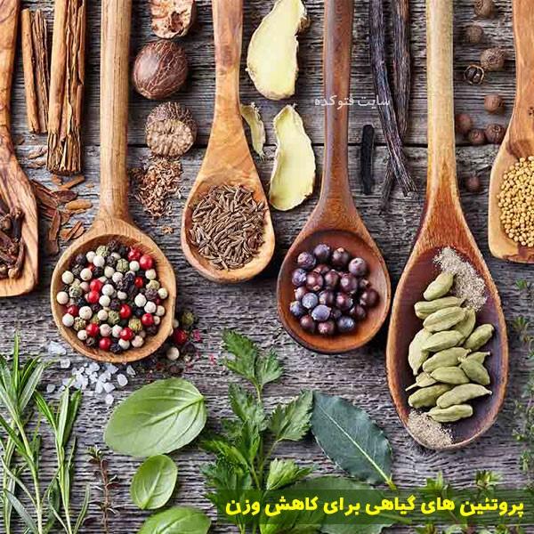 پروتئین های گیاهی کاهش وزن