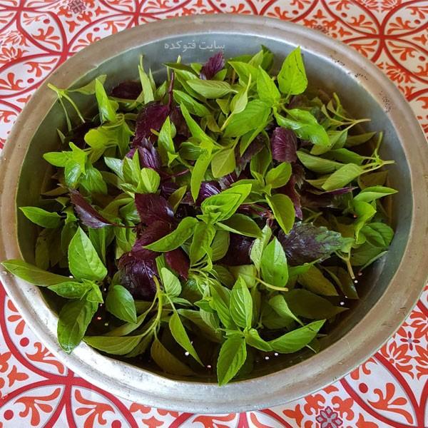 خواص ریحان سبز و بنفش در طب سنتی برای سلامتی