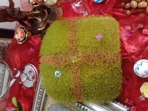 سبزه خاکشیر + آموزش طرز تهیه سبزه عید با خاکشیر