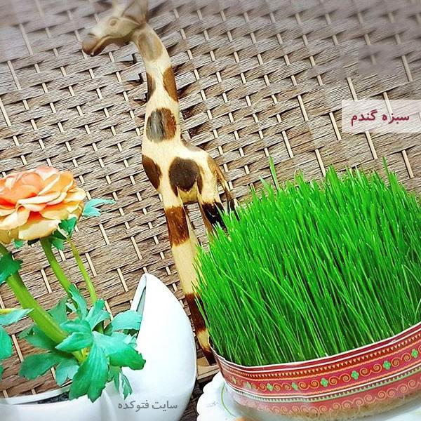 آموزش طرز تهیه سبزه گندم برای عید نوروز