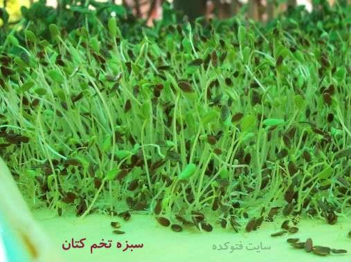 آموزش طرز تهیه سبزه تخم کتان برای عید نوروز