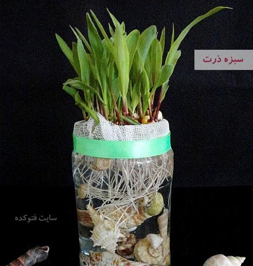 آموزش طرز تهیه سبزه ذرت برای عید نوروز