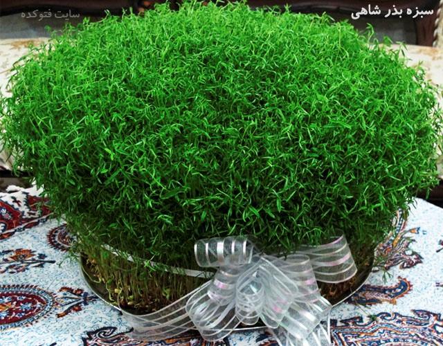 آموزش کاشت سبزه عید نوروز؛ سبزه فانتزی سبزه خاکشیر عکس