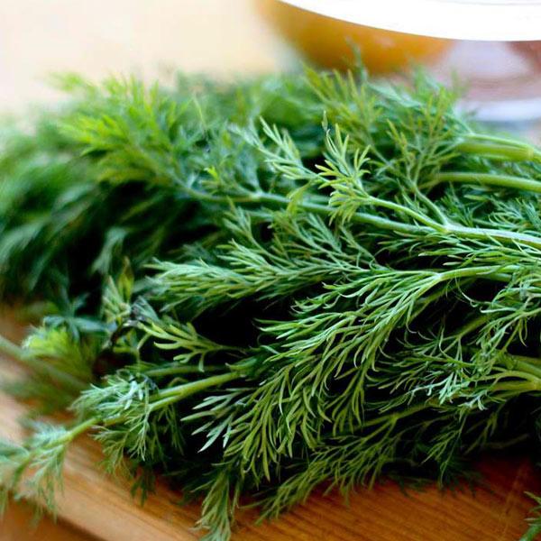 شوید در سبزیجات معطر شمالی ایرانی