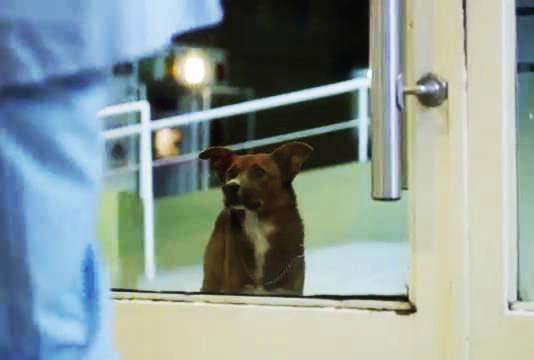 ویدیو سگ وفادار یک پیرمرد تنها,,عشق سگ به صاحبش,ویدیو از وفای سگ به صاحبش,ویدیو تبلیغاتی سگ وفادار به پیر مرد تنها,وفادارترین سگ دنیا,ویدیو وفاداری حیوانات