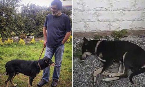 مرگ سگ حبیب محبیان,سگ حبیب فوت کرد,مرگ بلکی سگ حبیبی محبیان,عکس سگ حبیب,خودکشی بلکی سگ حبیب,سگ حبیب بنام بلکی خودکشی کرد,ماجرای مرگ بلکی سگ حبیب محبیان عکس