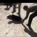 فیلم کشتن سگ با اسید در شیراز