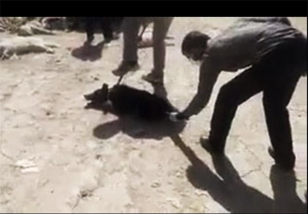 ویدیو کشتن سگ با اسید در شیراز,فیلم تزریق اسید به سگ در شیراز,ویدیو امپول اسید به سگ ها در شیراز,کشتار بی رحمانه سگ ها در شیراز با اسید,کشتن وحشیانه حیوان
