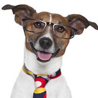 حیوان سال 97 چیست + خصوصیات و طالع بینی سال سگ