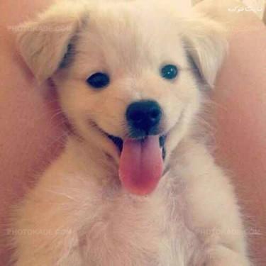 عکس سگ های زیبا و دوست داشتنی