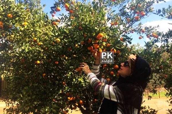 عکس شبنم قلی خانی و همسرش در استرالیا,عکس خوش گذرانی شبنم قلی خانی در استرالیا,عکس شبینم قلی خانی و همسرش,شبنم قلی خانی و همسرش در باغ نارنج,عکس بازیگر زن