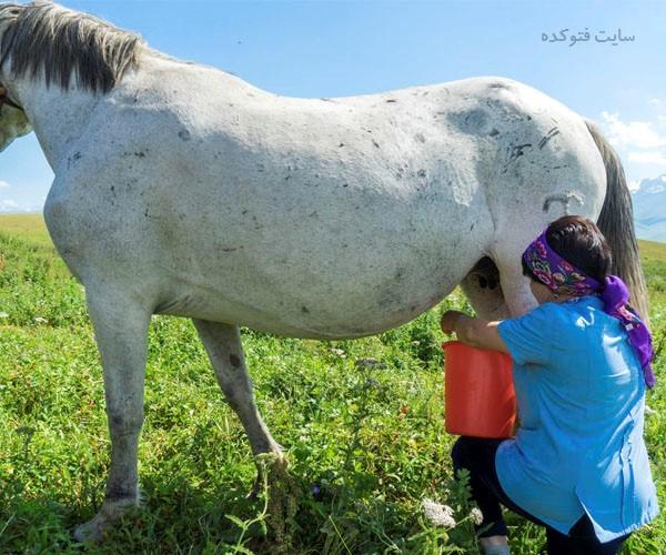 شیر اسب چه فوایدی دارد