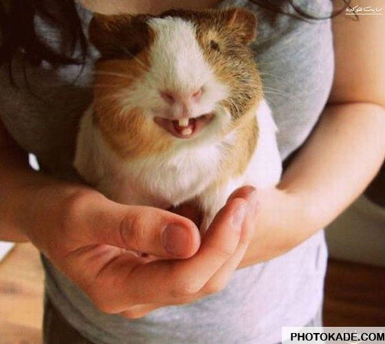 smiling-animals-photokade (10)