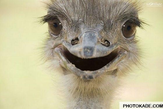 عکس های جالب خندیدن حیوانات,تصاویر خنده دار از حیوانات,عکس خنده دار حیوانات,خندیدن حیوانات,عکس حیوانات در حال خندیدن,مسخره بازی حیوانات,عکس حیوانات,حیوانات