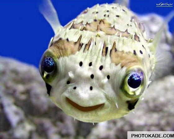 smiling-animals-photokade (2)