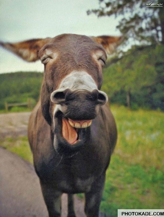 smiling-animals-photokade (20)
