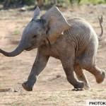 عکس های جالب خندیدن حیوانات