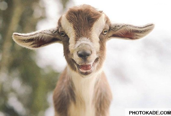 smiling-animals-photokade (5)