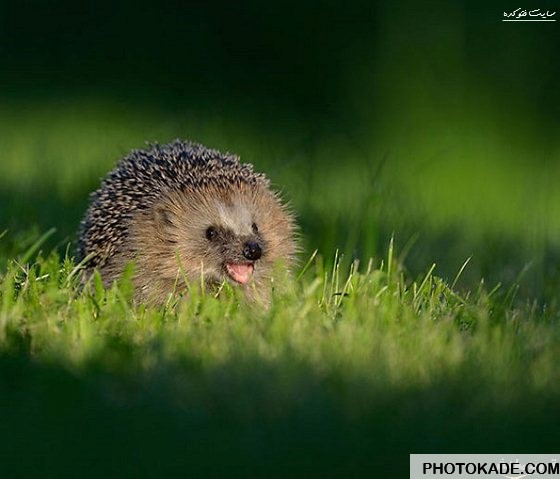 smiling-animals-photokade (6)