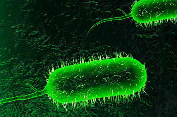 شناسایی اولین بیمار مبتلا به وبا در ایران,شیوع وبا در کشور,اولین بیمار مبتلا به وبا در قم,آماده باش برای بیماری وبا در ایران,خطر شیوع بیماری وبا در ایران