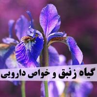 خواص زنبق برای پوست ، رحم و لاغری در طب سنتی